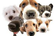 Πρόσκληση δήλωσης δεσποζόμενου ζώου/ων συντροφιάς στο Δήμο Σερβίων-Βελβεντού