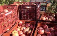 Γνωριμία με την «Οικοτεχνία – Χυμός Ρόδι» στις Γούλες Σερβίων