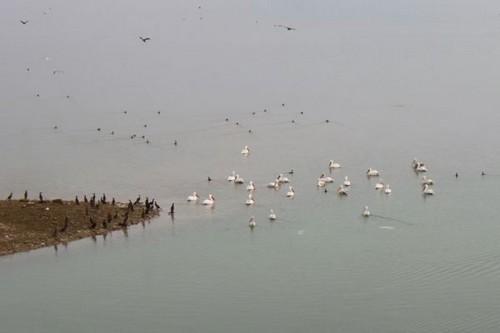 Ο μαγευτικός φτερωτός πλούτος στη Λίμνη Πολυφύτου