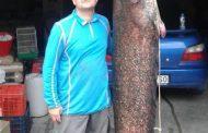 Έβγαλε γουλιανό 84 κιλών στη λίμνη Πολυφύτου επαγγελματίας ψαράς από το Βελβεντό