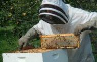 Yποβολή αιτήσεων για Κυψέλες Διαχείμασης μελισσιών