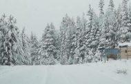 Πανέμορφες κατάλευκες φωτογραφίες από το Καταφύγι και του δρόμου από εκεί προς το χιονοδρομικό του Ελατοχωρίου