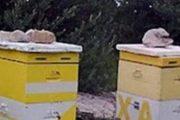Αιτήσεις μελισσοκόμων για «Αντικατάσταση κυψελών» και « Ενίσχυση της νομαδικής μελισσοκομίας»